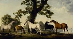 Five Brood Mares at the Duke of Cumberland's Stud Farm in Windsor Great Park