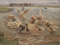 Geese on the Island of Saltholm