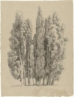 Groep cipressen
