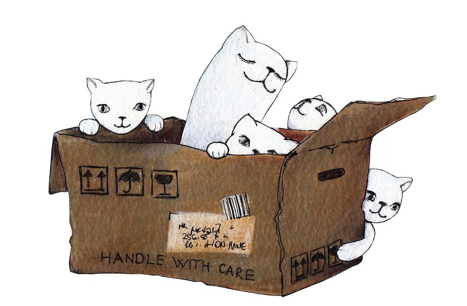 Cardboard Cave-Box