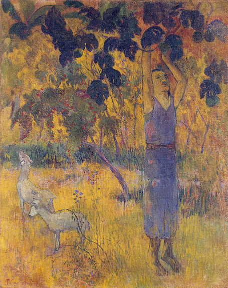 Man Picking Fruit from a Tree