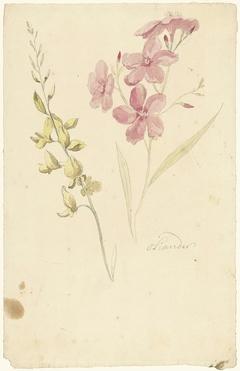 Oleander en brem