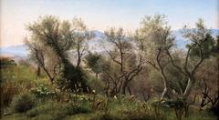 Olive Trees near Olevano
