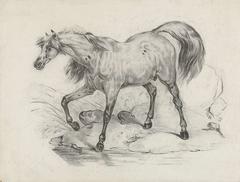 Staand paard, naar links