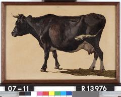 Studie van een zwartbonte koe