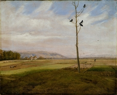 Tree with four ravens