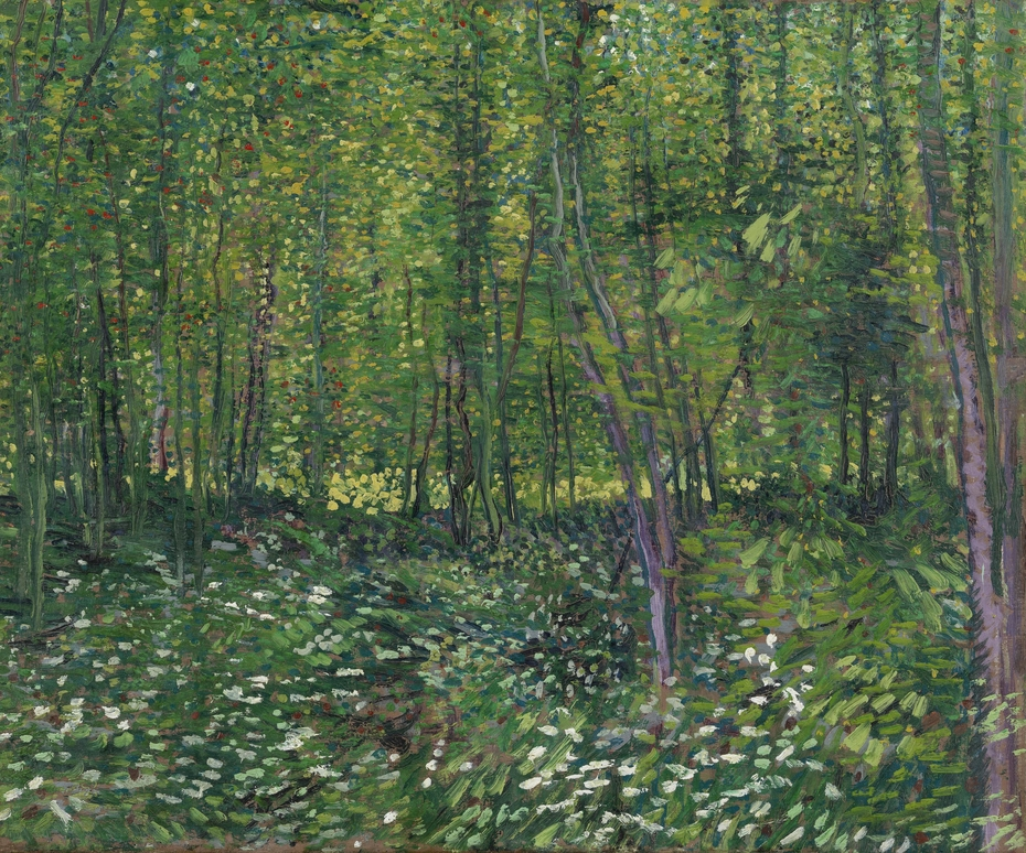 Trees and Undergrowth