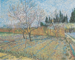 Flowering orchard with peach-trees