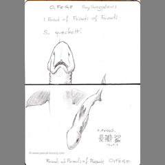 Carnet Bleu: Encyclopedia of…shark, vol.V p8 by Pascal