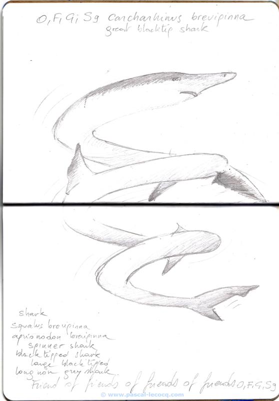 Carnet Bleu: Encyclopedia of…shark, vol.X p 26, pencil on paper by Pascal