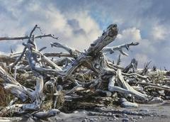 """Driftwood Snag    15  5/8""""  x 22"""""""