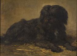 Een langharige hond