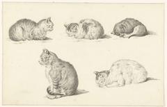 Fives Studies of Cats