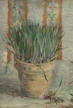 Flowerpot with Garlic Chives