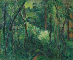 Interior of a forest