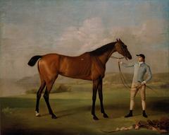 Molly Long-legs with her Jockey