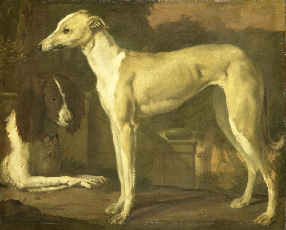 Portrait of a greyhound and a spaniel
