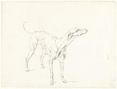 Studie van een staande hond, naar rechts