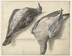 Twee dode duiven