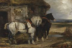 Two Farm Horses by a Barn