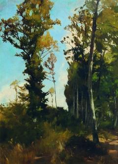 Waldlichtung bei Purkersdorf