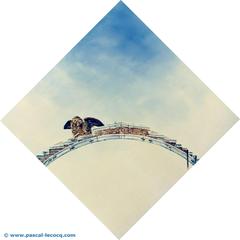 CERBERO DELLA MISERICORDIA - Cerberus of the Ponte della Misericordia - by Pascal