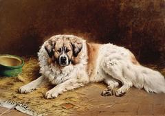 Figaro - pet Pyrenean mountain dog
