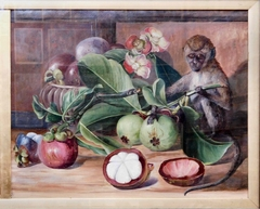 Flowers and Fruit of the Mangosteen, and a Singapore Monkey