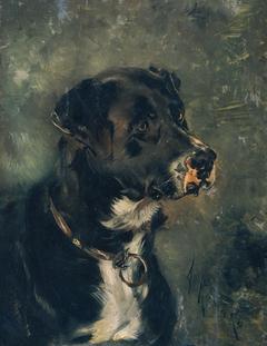 Kopf eines Fleischerhundes