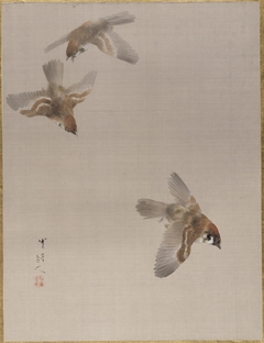 Sparrows Flying