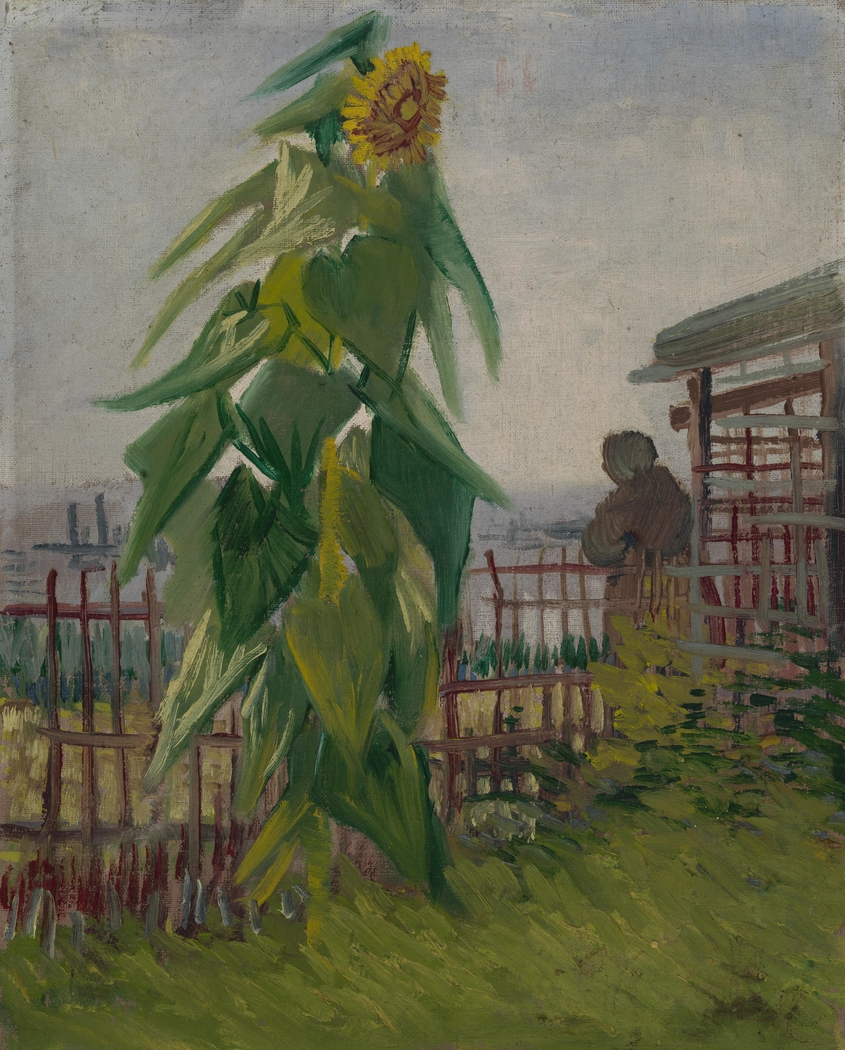 Allotment with Sunflower