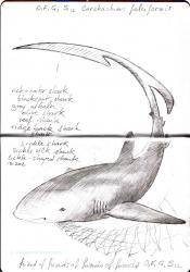 Carnet Bleu: Encyclopedia of…shark, vol.XI p 04 -  by Pascal