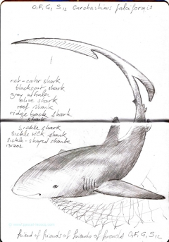 Carnet Bleu: Encyclopedia of…shark, vol.XI p 04 -  by Pascal