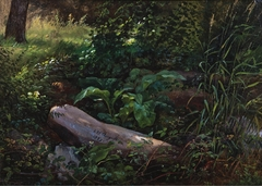 Forest Study from Grosser Garten in Dresden