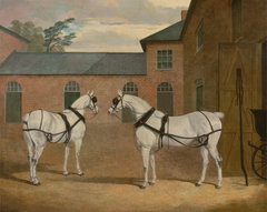 Grey carriage horses in the coachyard at Putteridge Bury, Hertfordshire