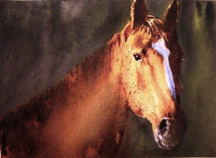 Portrait of a brown stallion