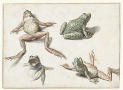Vier studies van een kikker