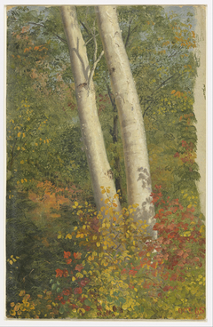 Birch Trees in Autumn