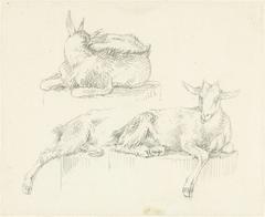 Drie studies van liggende geiten