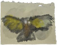 master owl