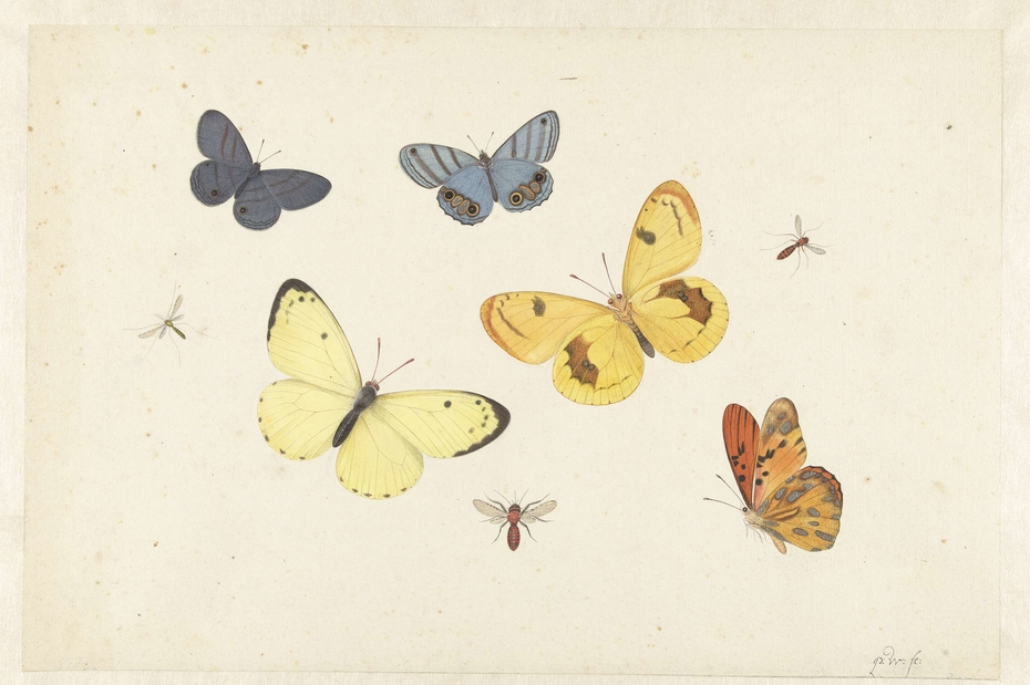 Sheet with Five Butterflies, a Wasp and Two Flies