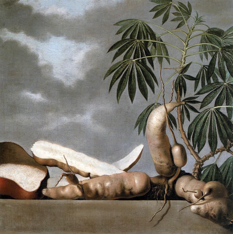 Still-life of the tropical fruit manioc