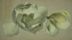 Study of Two Magnolia Blossoms