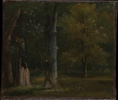Trees in the Bois de Boulogne, Paris
