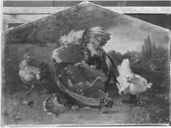 Truthahn und Hahn