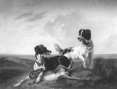 Twee honden strijden om een haas